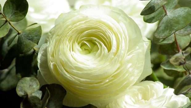 flowers-728811_1280