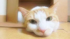 癒される!猫がかわいいすぎるCM3選