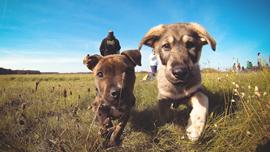 「動画」は無料でプロの技術を学べるアイテムだ! 愛犬との仲も一層深まる、上手なトリミング方法