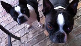 犬って、想像以上に小さい!小型カメラ「GoPro」をペットに装着して、いつもと違う景色を撮影しよう
