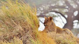 迫力はサファリパークの10倍!GoProで見る、驚愕の猛獣・珍獣たち