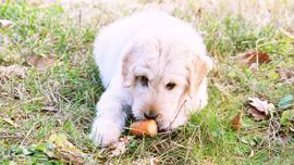 そのドッグフード、本当に大丈夫!?愛犬に食べさせたい、健康的な手作りご飯【動画つき】