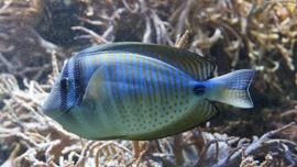 南国の癒やし・熱帯魚が登場する動画まとめ!