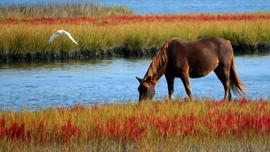 びっくり&可愛い&癒される!動画で見る馬の世界