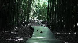 誰も気付いてない!?動画で紐解く日本の竹林の実態