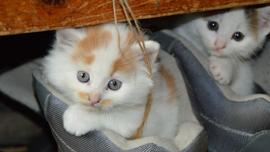 猫の魅力満載の猫動画は大人気