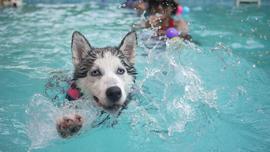 動画でも面白い!趣向を凝らしたプールで楽しむ日本の夏