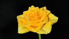 早回し画像で花の成長を見る