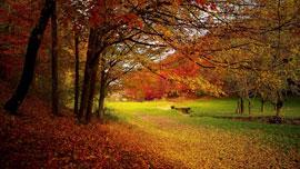 紅葉の景色と名所が楽しめるYouTube動画まとめ