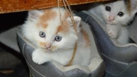 猫好きにおすすめ♡キュートなCM・映像集