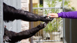 子供達に見せたら動物園に行きたくなってしまうYouTube動画まとめ