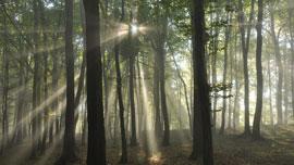 森の音をYouTube動画で聞いて癒されよう!