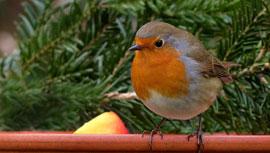 見てるだけで癒される!鳥をYouTube動画4選