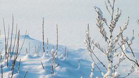 白く輝く冬の華、「雪」アートの数々を動画でご紹介!