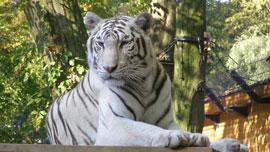 動画で目の前に動物園!?まるで動物園の中にいるような動画をご紹介!