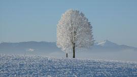 日本の美しい冬を動画で体感しよう!