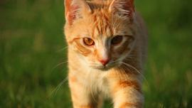 猫好きにおすすめのYouTube動画4選