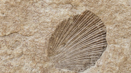 日本でも新種の化石が続々!動画で目撃する古代生物の痕跡