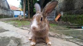【動物好き必見】Facebookでシェアされまくってる可愛すぎる動物動画を集めてみた